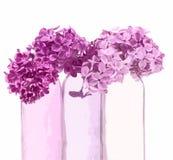 Lila rosada en floreros rosados Foto de archivo