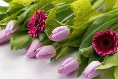 Lila tulpan och rosa gerbera på en vit bakgrund Royaltyfri Foto