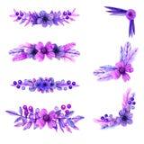 Lila und rosa Aquarellzusammensetzungen von Blumen und von Anlagen-elem lizenzfreie stockbilder