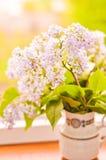lila vase Royaltyfria Foton