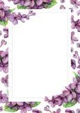 Lila violeta en fondo de la flor blanca Fotos de archivo