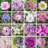 Lila-, vit- och rosa färgblommor Arkivfoton