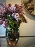 lila waza obrazy stock