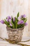 Lila wiązka tulipany Obraz Royalty Free