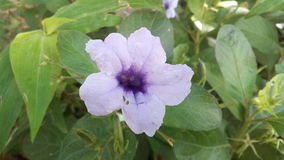 Lilablomma i en trädgård fotografering för bildbyråer