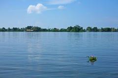 Lilablomman klibbar ut vattnet i den typiska Keralan soliga platsen Arkivbilder