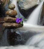 Lilablomman på Zen vaggar bildande med flödande vatten runt om den Arkivbild