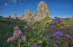Lilablommor och Cinque Torri berg, Dolomites, Veneto, Italien Royaltyfri Fotografi