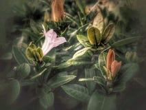Lilablommor och färgrika sidor Royaltyfri Fotografi