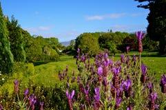 Lilablommor och grönt gräs arkivfoto