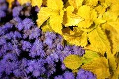 Lilablommor och gulingsidor Royaltyfri Bild