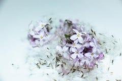 Lilablommor och maskrosfrö Royaltyfri Bild
