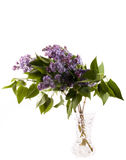 Lilac. Spring lilac on white background and green leaf Royalty Free Stock Photography