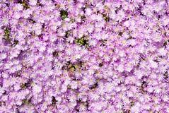 Lilac achtergrond Royalty-vrije Stock Afbeeldingen