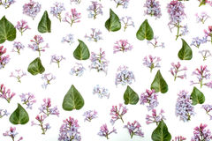 Lilac achtergrond van het bloemenpatroon Stock Afbeeldingen