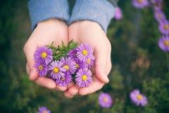 Lilac autumn flowersin the girl`s hand, soft focus. Stock Photography