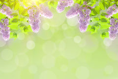 Lilac background Stock Images