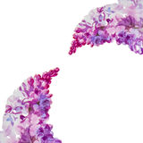 Lilac background. Beautiful watercolor lilac flowers background. With place for text royalty free illustration