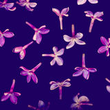 Lilac background Royalty Free Stock Photos