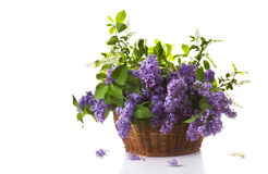 Lilac in a basket Stock Images