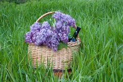 Lilac in a basket with a bottle of wine, standing on green grass royalty free stock photos