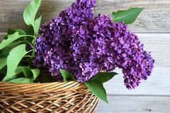 Lilac in a basket Stock Image