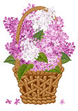 Lilac in basket Royalty Free Stock Photos