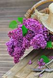 Lilac in a basket with hat Royalty Free Stock Image