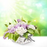 Lilac in a basket Royalty Free Stock Photos