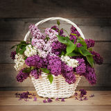 Lilac in basket Royalty Free Stock Image