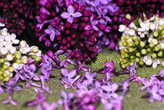 Lilac. Beautiful still life with lilac Royalty Free Stock Photo