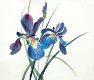 Lilac blauwe irisbloemen stock illustratie