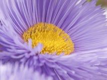 Lilac bloem. Macro. Royalty-vrije Stock Afbeeldingen