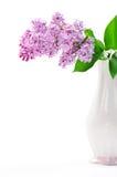 Lilac bloem in vaas Royalty-vrije Stock Foto