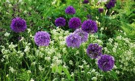 Lilac bloembal Royalty-vrije Stock Fotografie