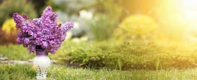 Lilac bloembanner Royalty-vrije Stock Foto's