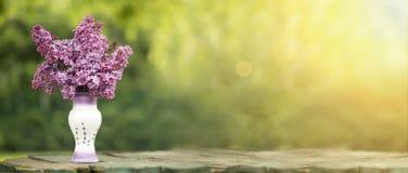 Lilac bloembanner Stock Foto