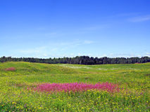 Lilac bloemen Stock Afbeeldingen