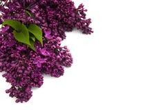 Lilac bloemen Stock Fotografie