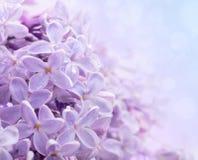 Lilac bloemen. Abstracte achtergrond. Stock Afbeeldingen