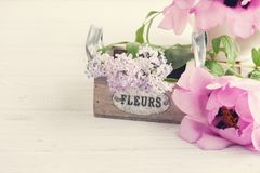 Lilac bloemen in doosclose-up Stock Fotografie