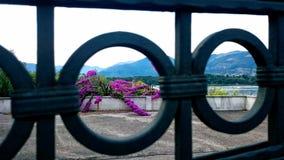 Lilac bloemen en gating stock foto