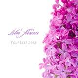 Lilac bloemen met steekproeftekst Royalty-vrije Stock Foto