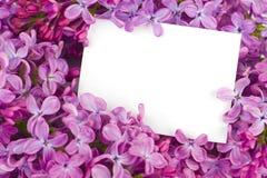 Lilac bloemen met steekproeftekst Stock Fotografie