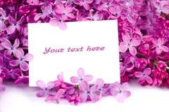 Lilac bloemen met steekproeftekst Stock Afbeeldingen