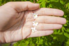 Lilac bloemen met vijf bloemblaadjes is een symbool van goed geluk royalty-vrije stock afbeeldingen