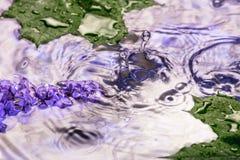 Lilac bloemen onder de dalingen van de regen Royalty-vrije Stock Afbeeldingen