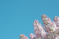 Lilac bloemen op blauwe hemel als achtergrond stock foto