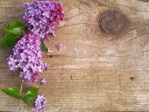 Lilac bloemen op een achtergrond Stock Foto's