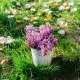 Lilac bloemen op het gras met bloemblaadjes Royalty-vrije Stock Fotografie